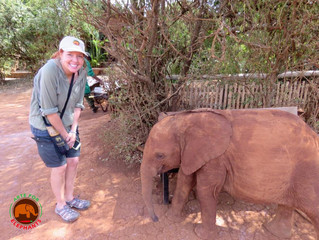 On the Road for Elephants- AFE