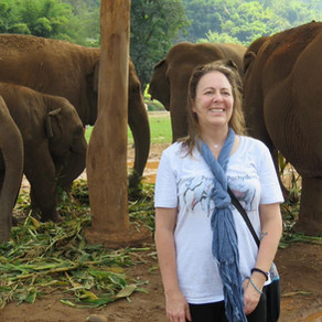 """""""Crazy Elephant Ladies"""" Lead the Charge to Save Endangered Elephants"""