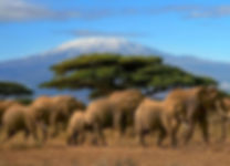 Elephants-near-Mt.-Kilimanjaro.jpg