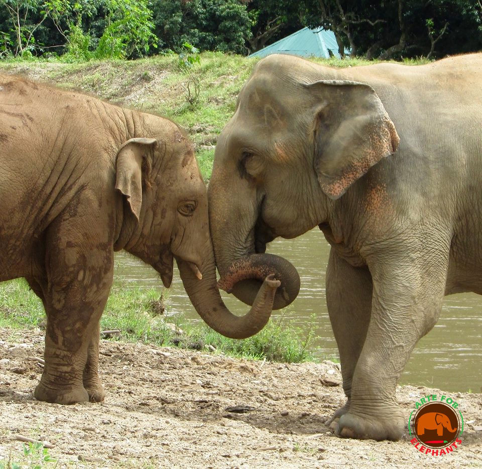 Navaan and Sri Prae at Elephant Nature Park by D. Rutter