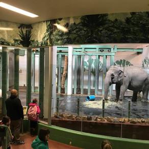 "Saving the ""Ice Elephants"""