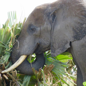 Botswana: Elephant Slaughter, Money and Why We're thinking about it all wrong.