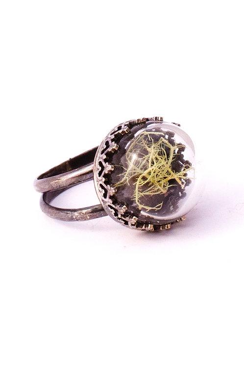 Lichen, thick glass globe, decorative silver ring