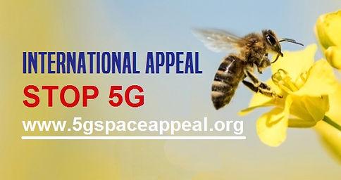 Bee jpeg.jpg