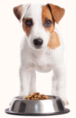 Alimentos para mascotas Cali