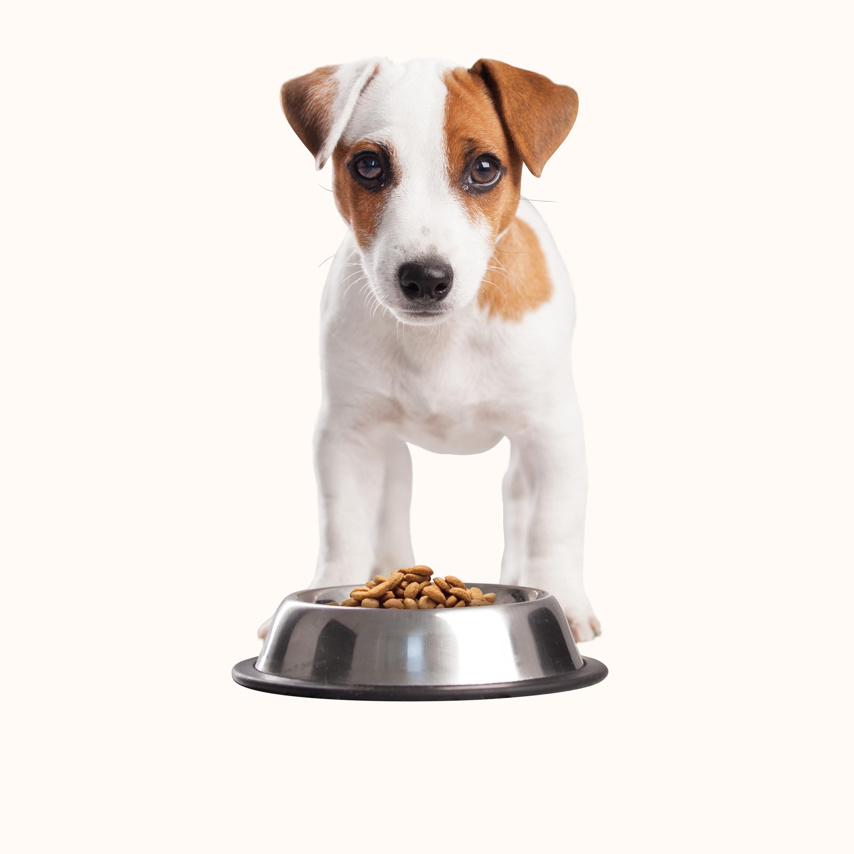 Dog Feeding