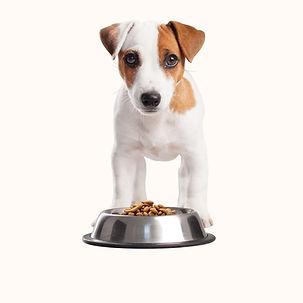 Puppy Having Lunch