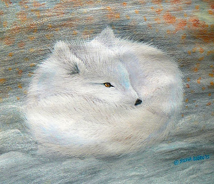 ARTIC_FOX_by_©Silvia_Björg_2015.JPG
