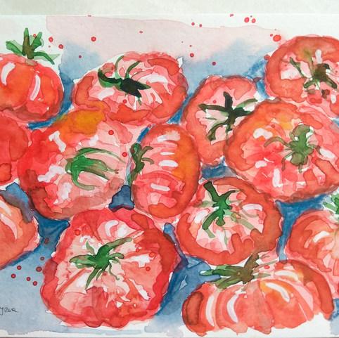 Maltese Tomatoes