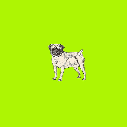 Pug on lime green