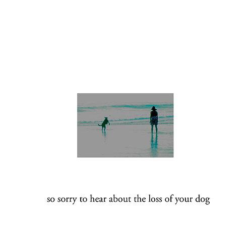 sympathy for dog (2)