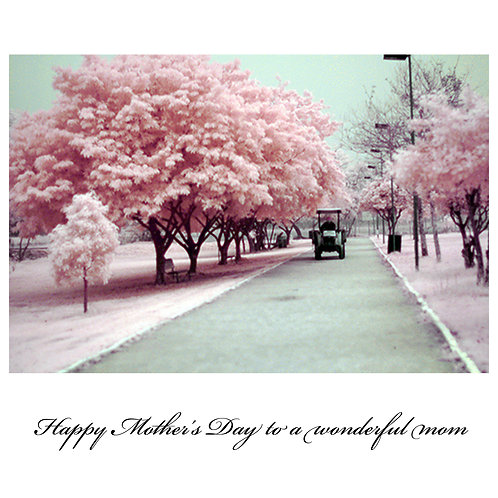 mother's day - spring blossoms