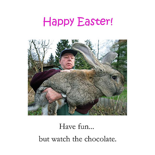 Easter - fat rabbit
