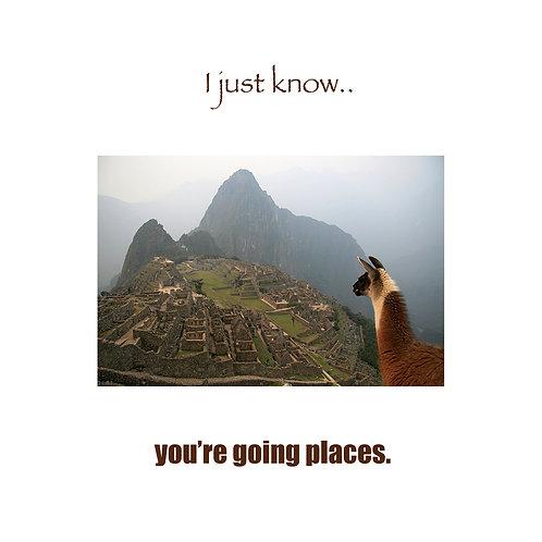 Grad - Llama in Machu Picchu