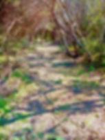 Bosques Los Algarrobos Campo Y polo_edit
