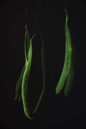 Runner bean dance