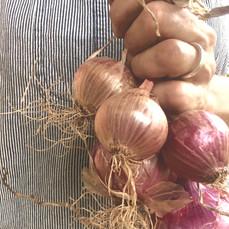 Loving the Bermuda Onions