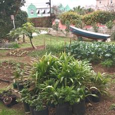 GROW BIOINTENSIVE Demo Garden