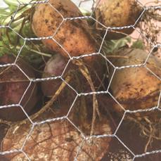 Beets & Mangels Harvest