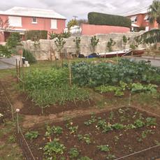 Demostration Garden