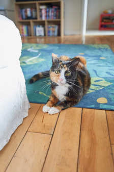 Muffin (Must be rehomed with Tubby)