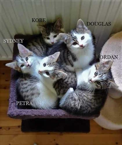 A Mischief of Kittens?