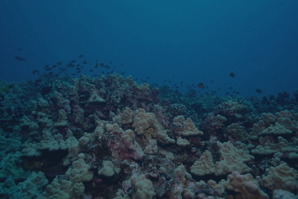 Fish and Coral in Pacific Ocean