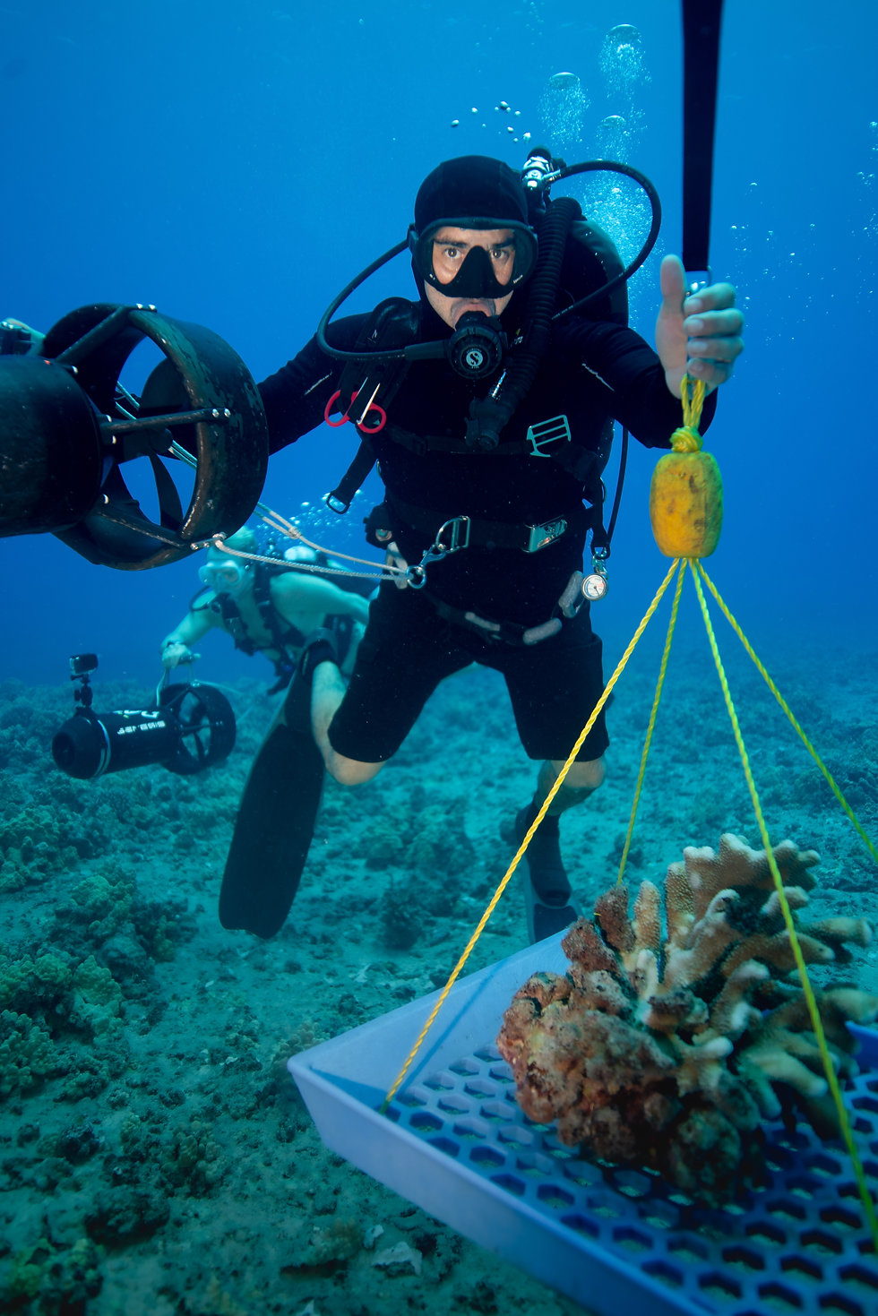 Scuba Diver Collecting dislodged Coral