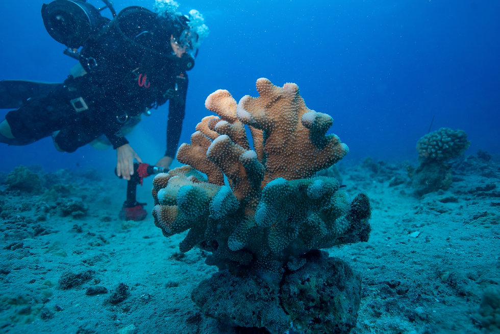 Scuba Diver and Coral on the Sea Floor