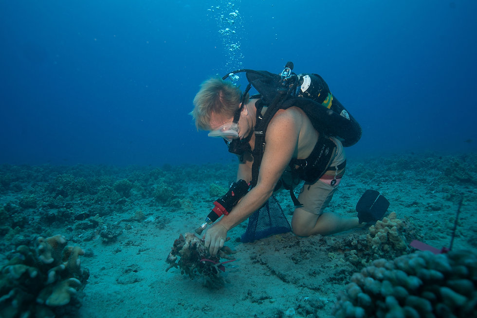 Scuba Diver Reattaching Coral for Coral Restoration