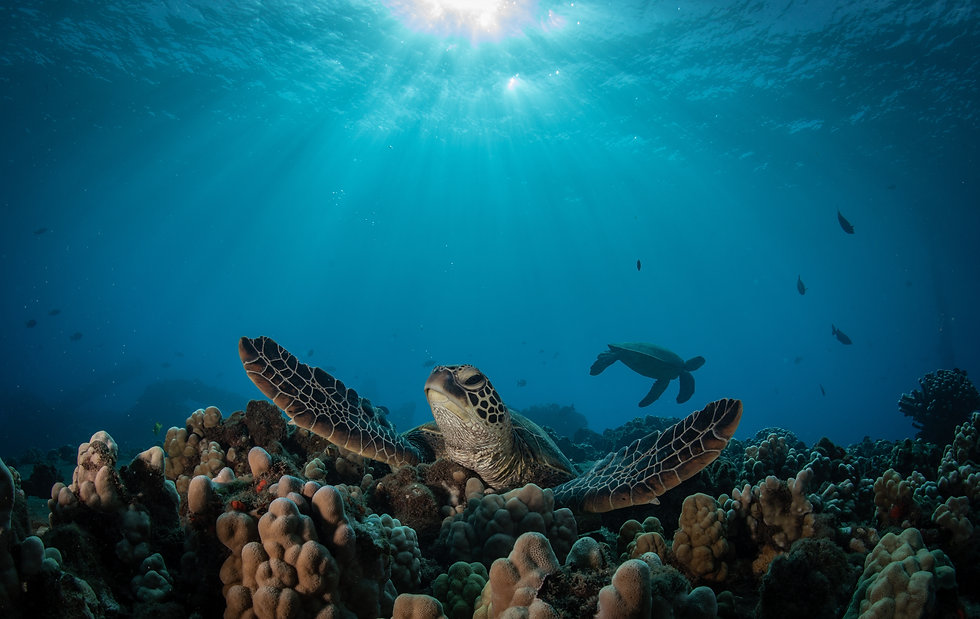 Seaturtle laying on top of coral and sunlight above the waves