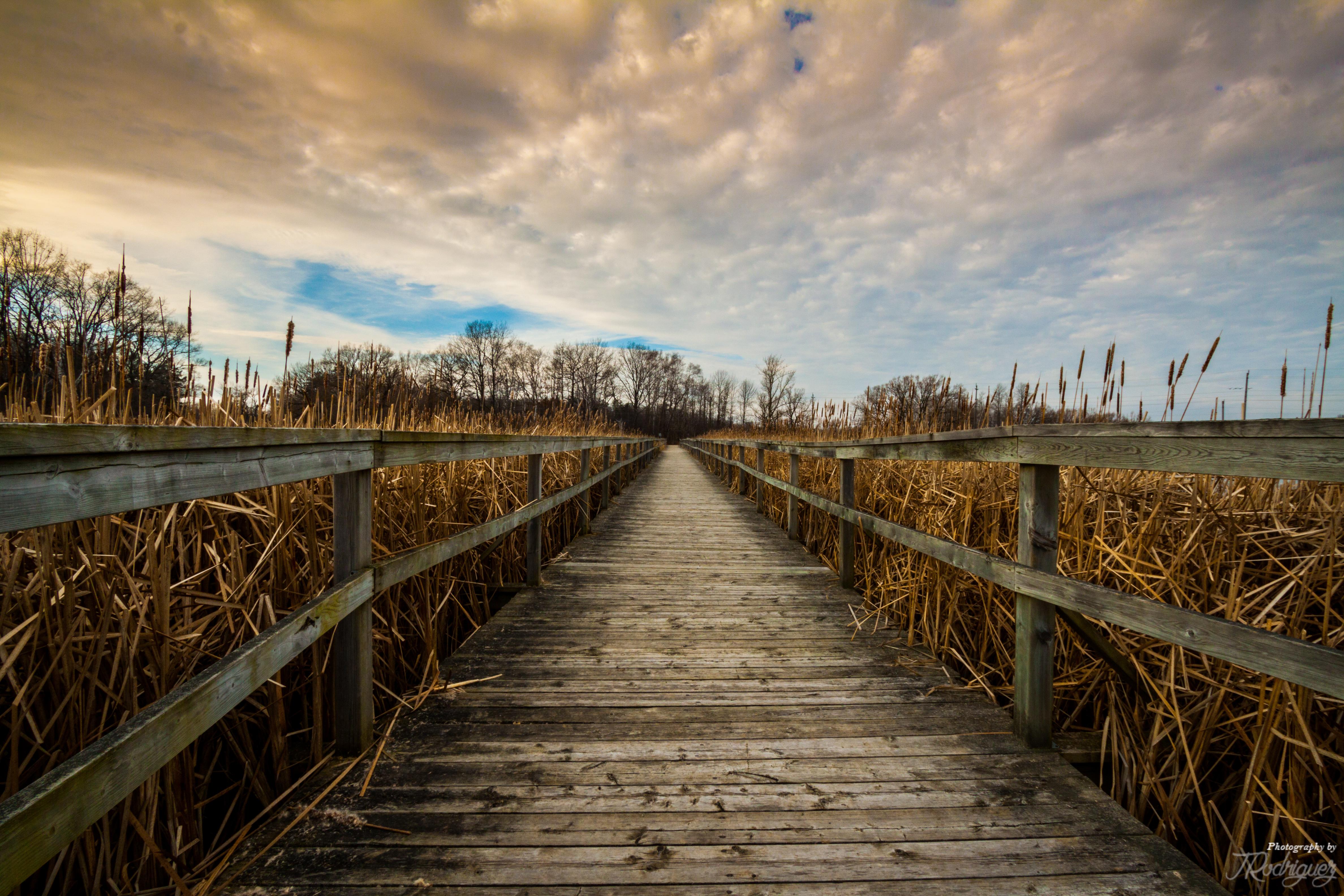 Lynde Shores Conservation Area, Ajax