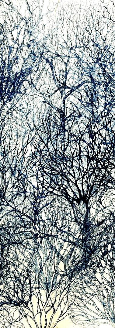 Door de Bomen het Bos Niet Meer Zien.