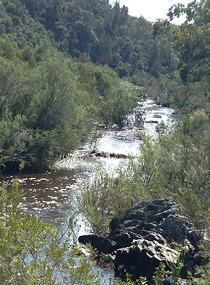 Running water stream through bush. Photo by Fiona Wood, Counsellor Queanbeyan, Counsellor Canberra