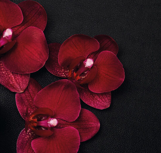 Orchid Leather