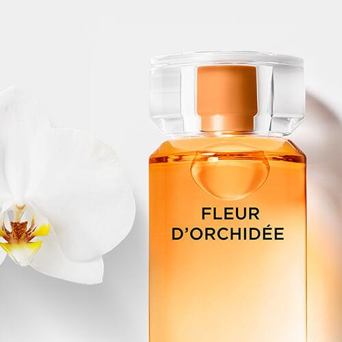 Fleur D'orchidee