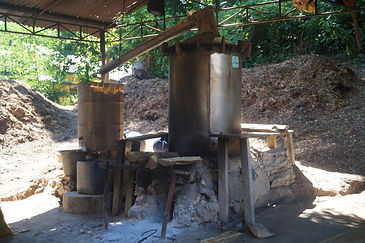 Producing Eucalyptus Oil in Kaibobo