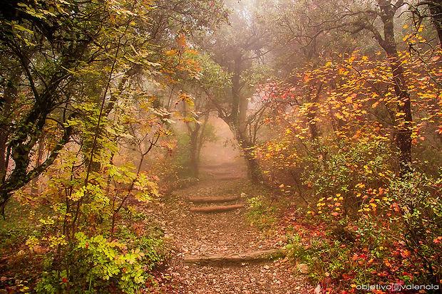 fontroja autumn .jpg