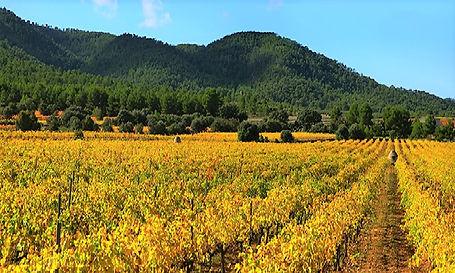 Bodegas Los Pinos.jpg