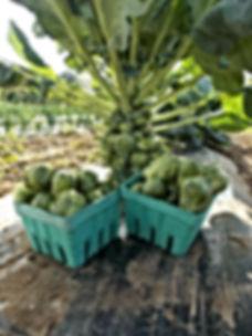 Ann's Raspberry Farm Brussels Sprout Pac