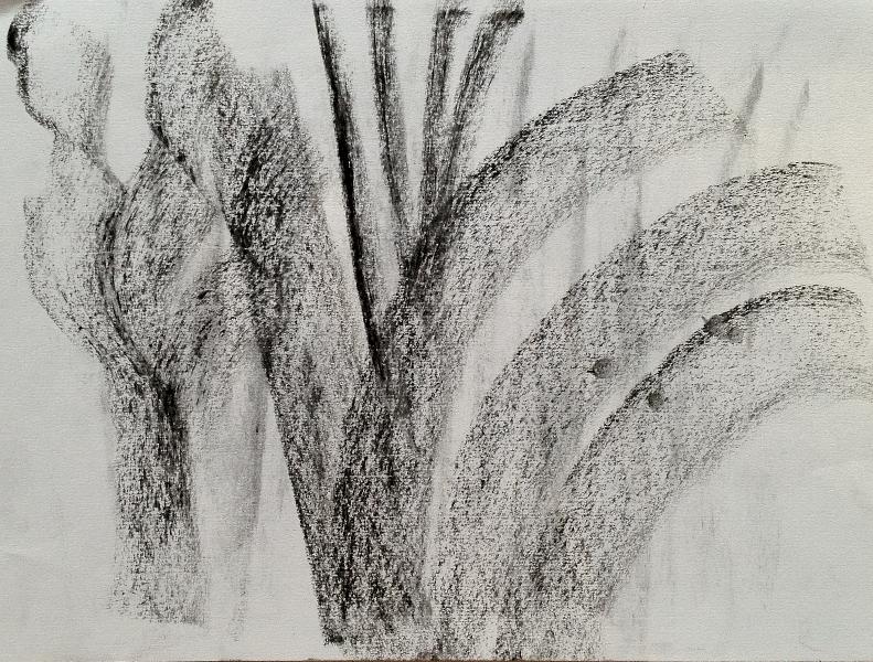 ג פחם על נייר ג  2012 021