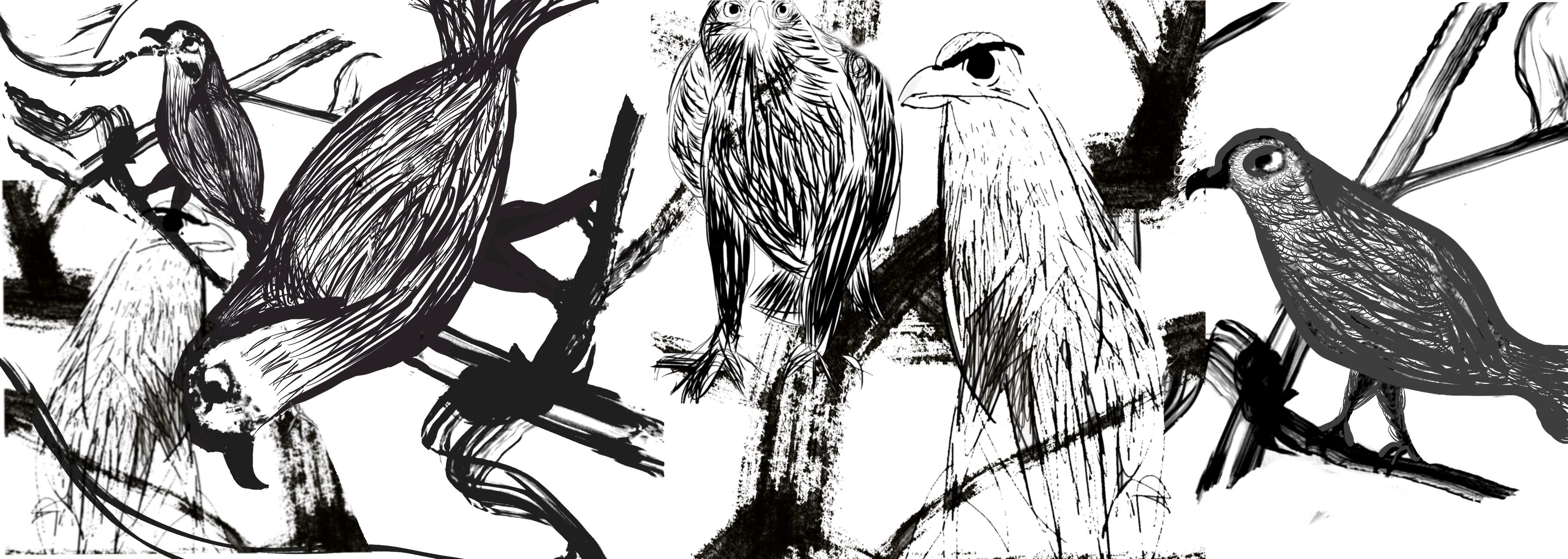 Many_Birds