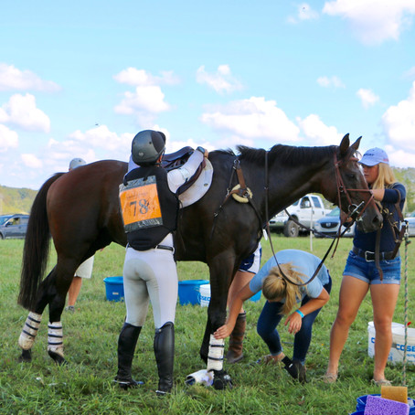 Prelim to Pro Returns to Plantation Field International Horse Trials