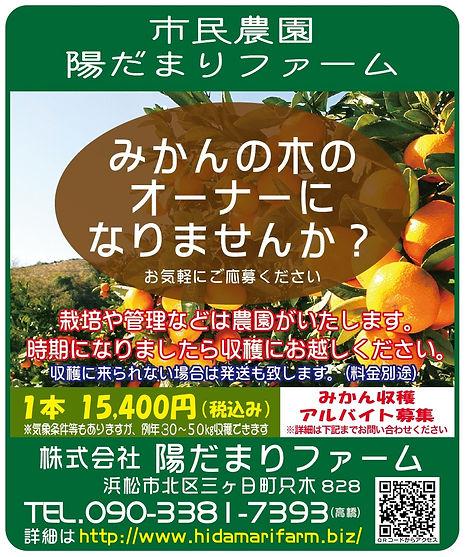 みかんの木のオーナー募集.JPG