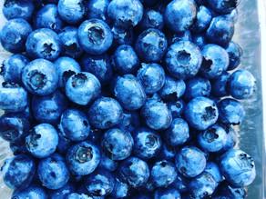 栽培期間中農薬不使用のブルーベリー