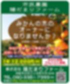 みかんの木のオーナーチラシ.JPG