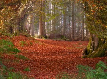 Kinclaven Wood