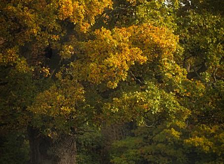 Autumn, The Most Fleeting Season