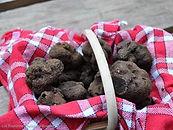 Les truffes du Quercy