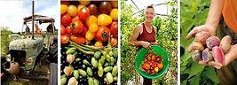 Producteurs et éleveurs locaux